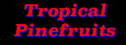 Tropical Pinefruits